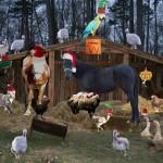 Our Lazy W Nativity
