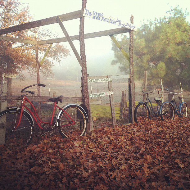 bikes in leaves dormant garden