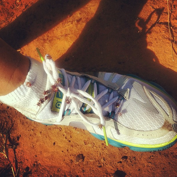 Since I run mostly here at the farm, in our red dirt and sand back field, these cute shoes aren't so white anymore.