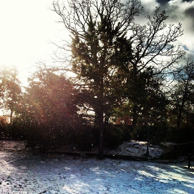 January snowfall and cold sunshine at the farm.