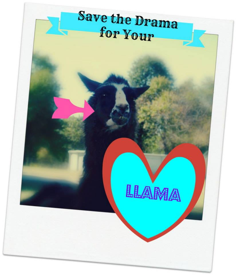 Save the drama for your llama. Or your cat. I don't want it.