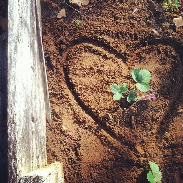heart in soil