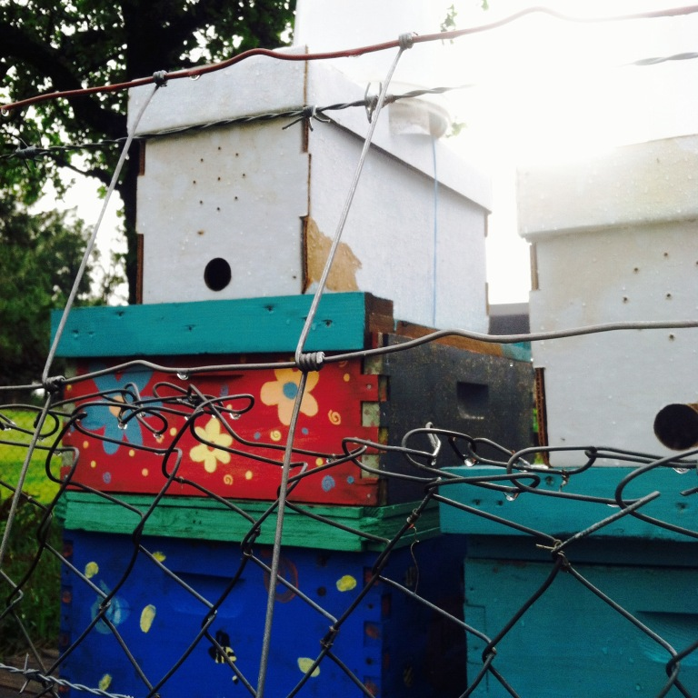 We had heavy rain at the farm all night and into the morning, sending the bees deep inside their boxes. I had a small panic attack thinking they had absconded on day three of living here. They're okay! Just staying warm and dry until the skies clear. If you look closely in the entrances you can see them churning about. Beautiful.