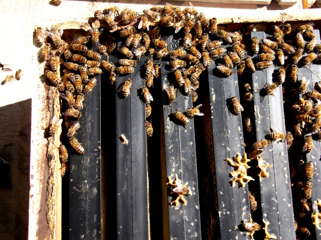 bees on frame corner
