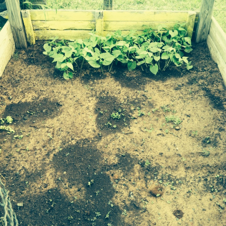 Blank spots in my raised beds are blank canvases. Room for improvement. And seeds are cheaper than paint!