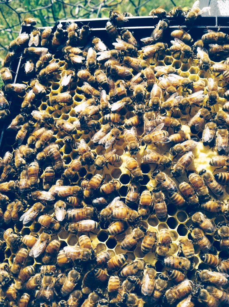 augbeeinspect shows so many bees
