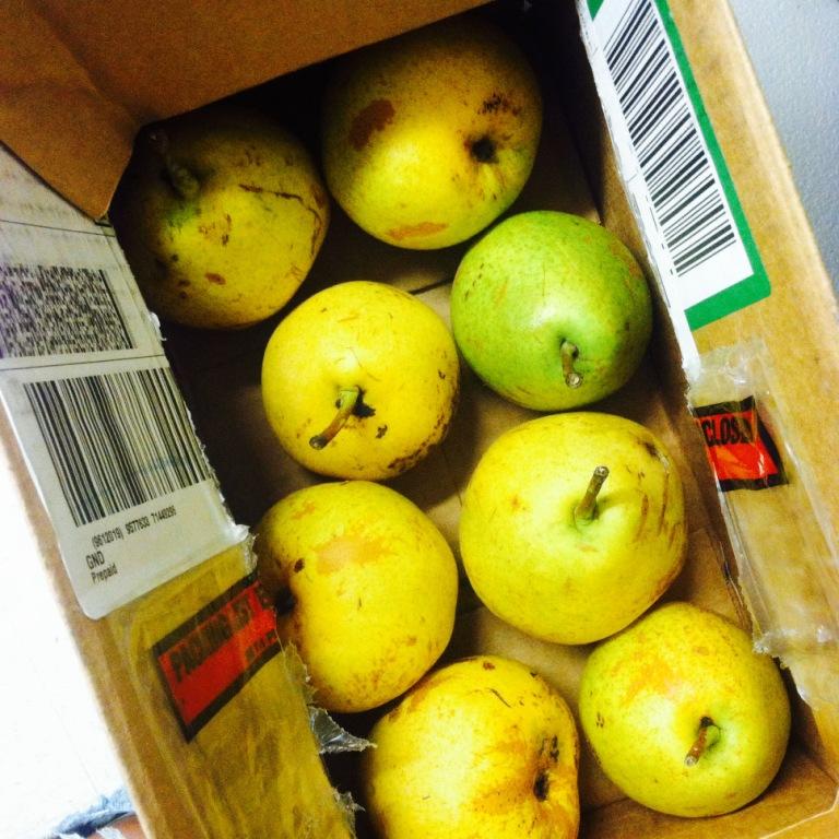 beeclub pears