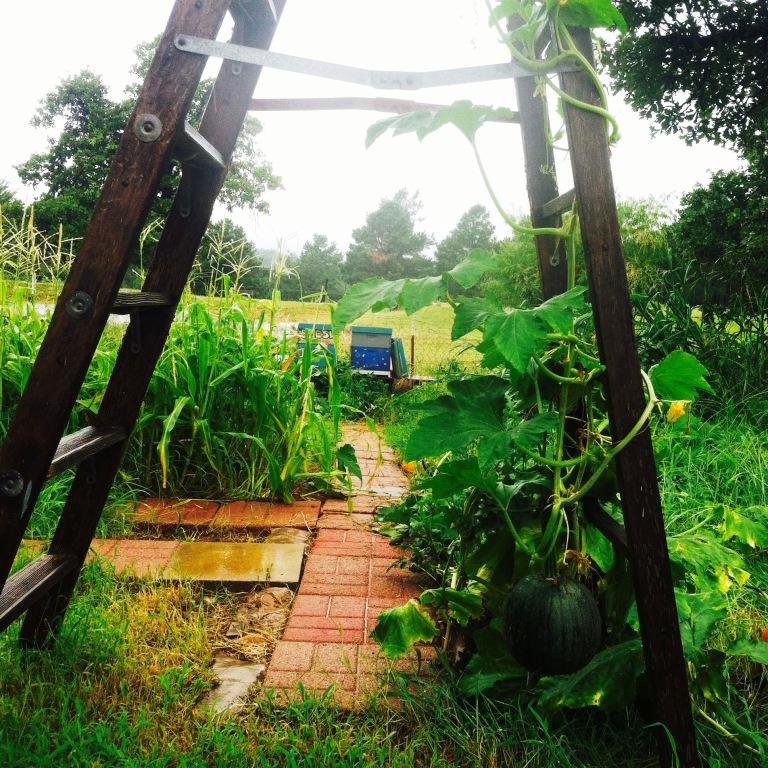 farm rain ladder