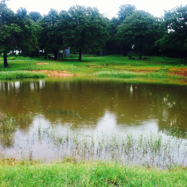 farm rain pond view