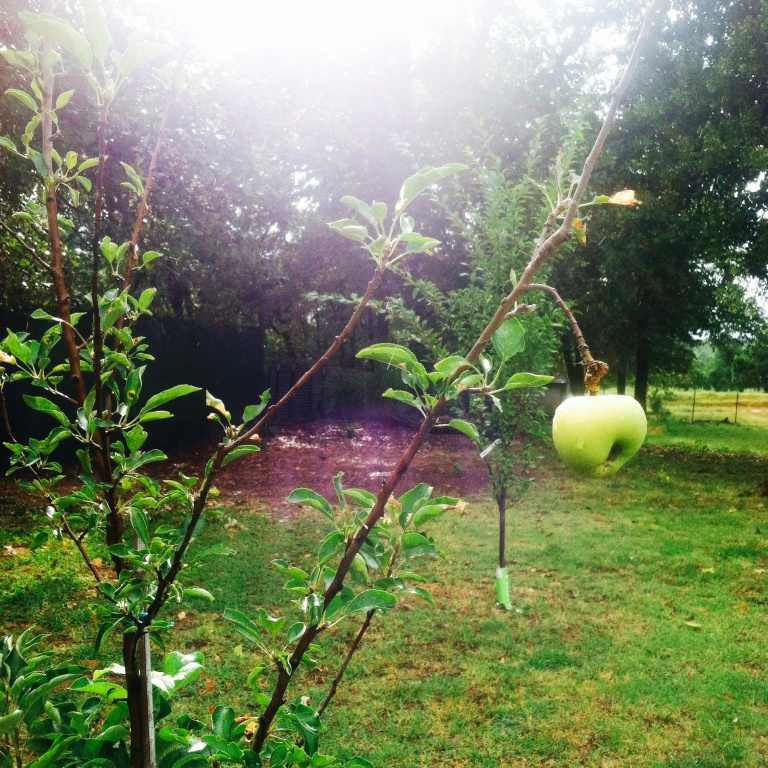slowfood apple growing