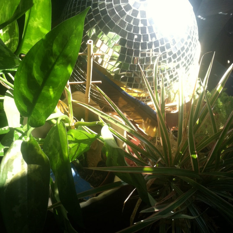 disco with green and sun