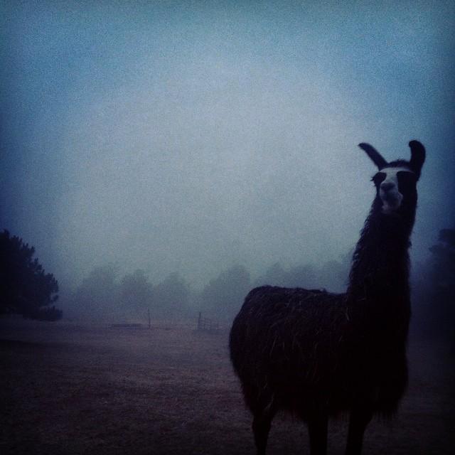 fog, lazy w, oklahoma, faith
