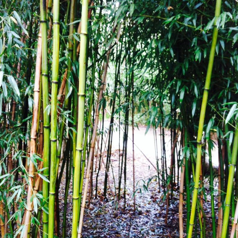 A bamboo grove at our beloved OKC Zoo. One of the photos I did manage to take this week. xoxo