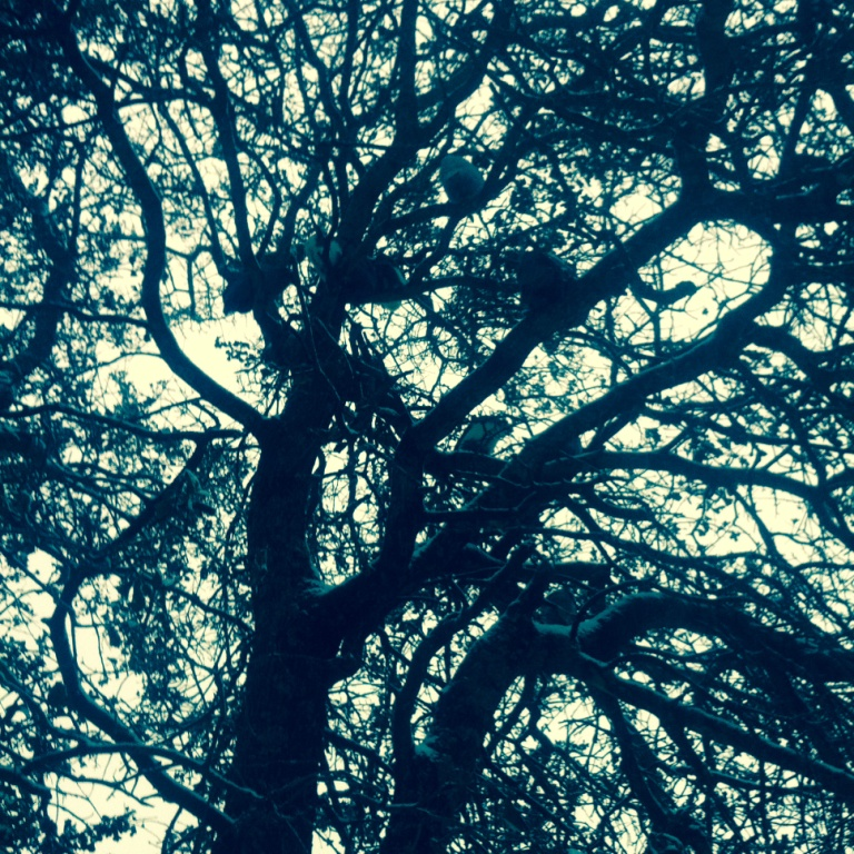 Our Talking Tree, filled with sleepy guineas, on a day so cold the air around us stayed bluish gray.