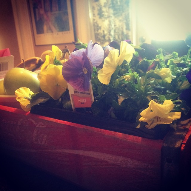 My Valentine bouquet this year was a small flat of really vibrant pansies. I love them. xoxo