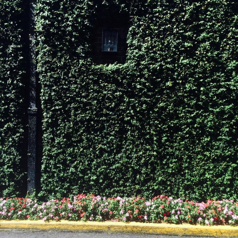CG solid green wall