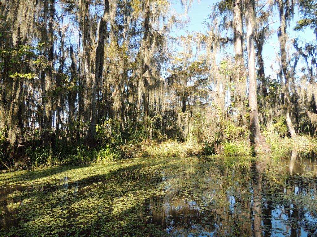NOLA swamp