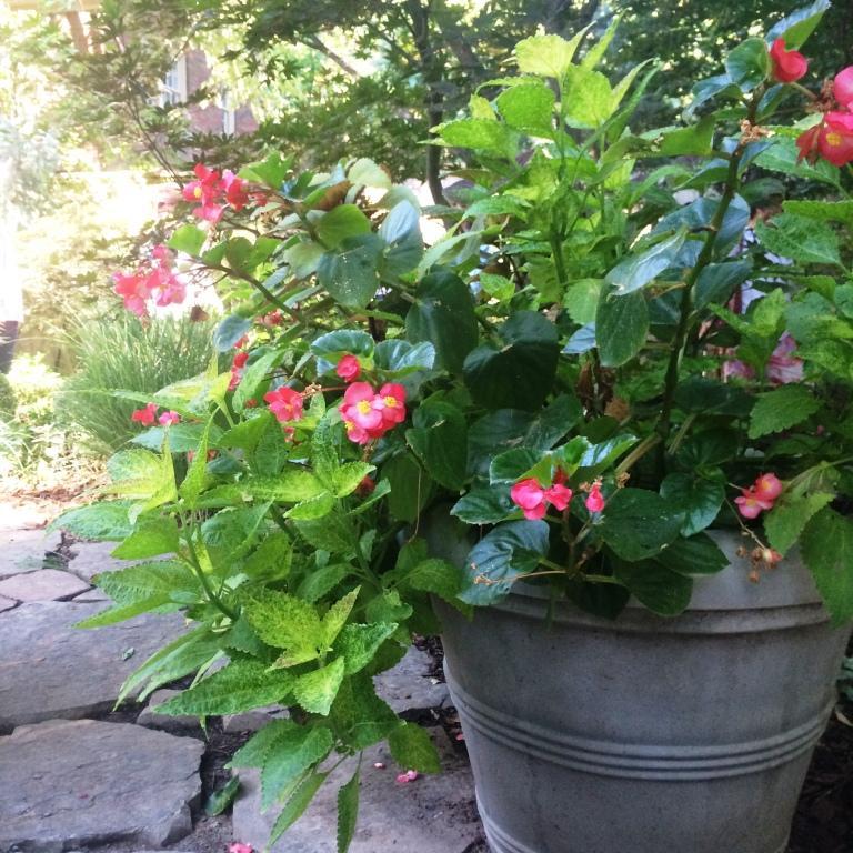 ELR pink pot