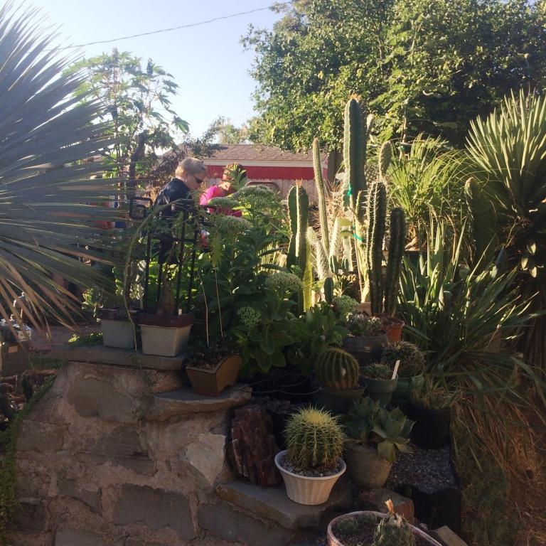 freddie cacti