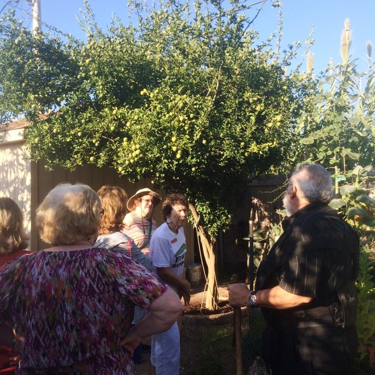 Here is Freddie talking to part of our group about his beautiful orange tree.