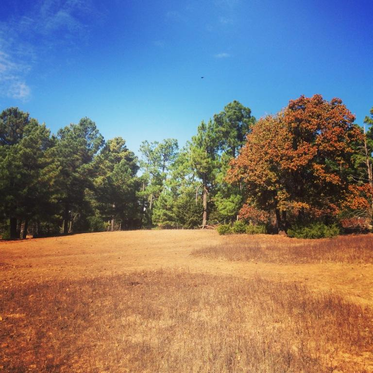 The west field loop is just perfection right now. Wedding Meadow is crunchy but colorful.