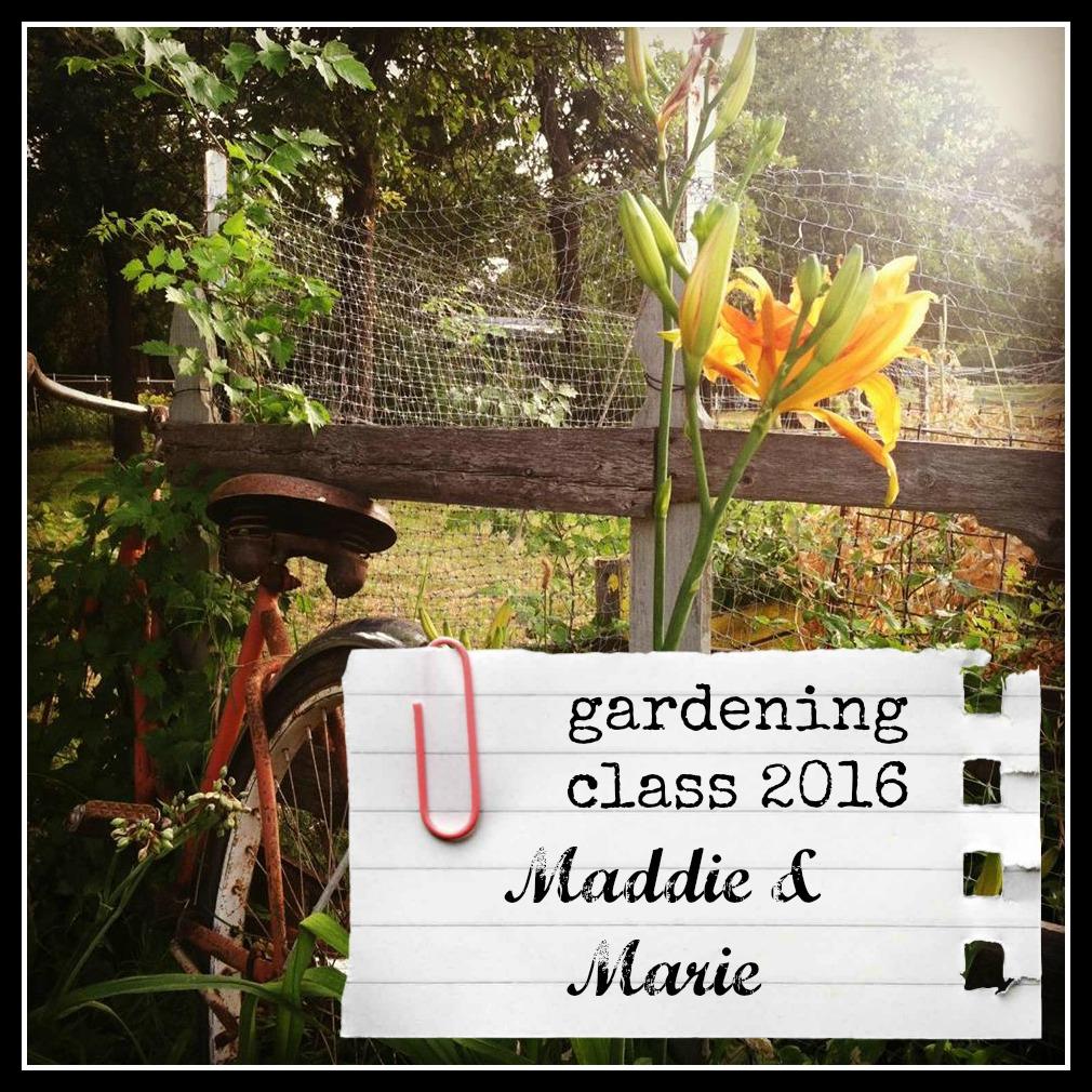 daylilies gardening class sticker