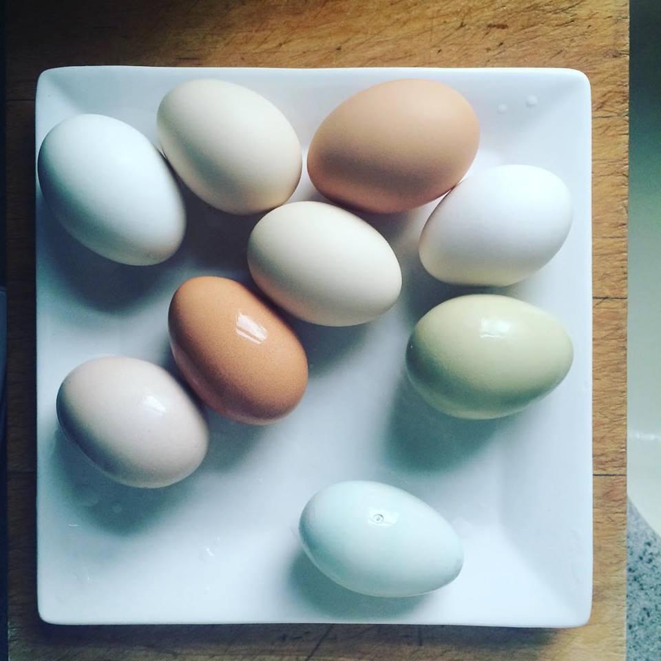 eggs square plate