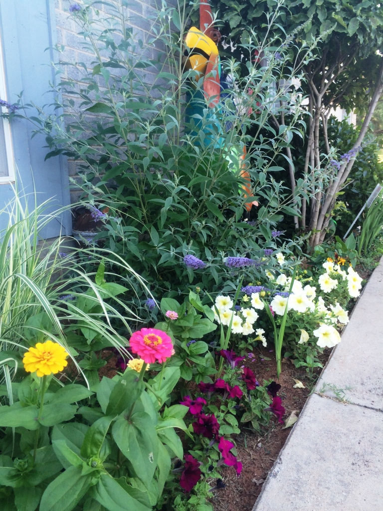 The east facing flower bed is gradually filling in with new colors. I am smitten all over again.