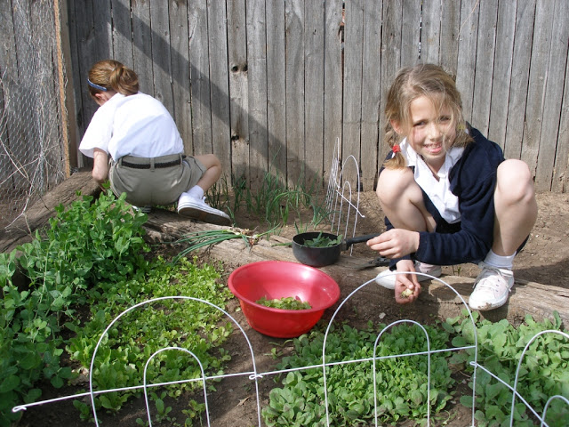 Miss Jessica showing me her lettuce clippings and Jocelyn behind her, plucking snow peas. Circa a lifetime ago.