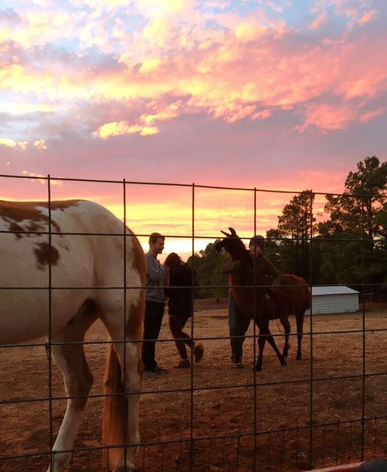 dec-horses-sunset-joc-c
