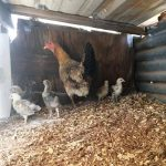 friday 5 at the farm: early summer joys